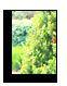 Elaguer les arbres 44 à Saint Mars de Coutais - ADJ Espaces Verts