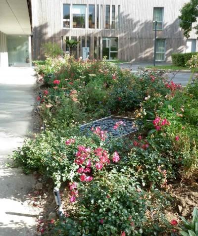 Jardin - entretien à réaliser - paysagiste Saint Mars de Coutais