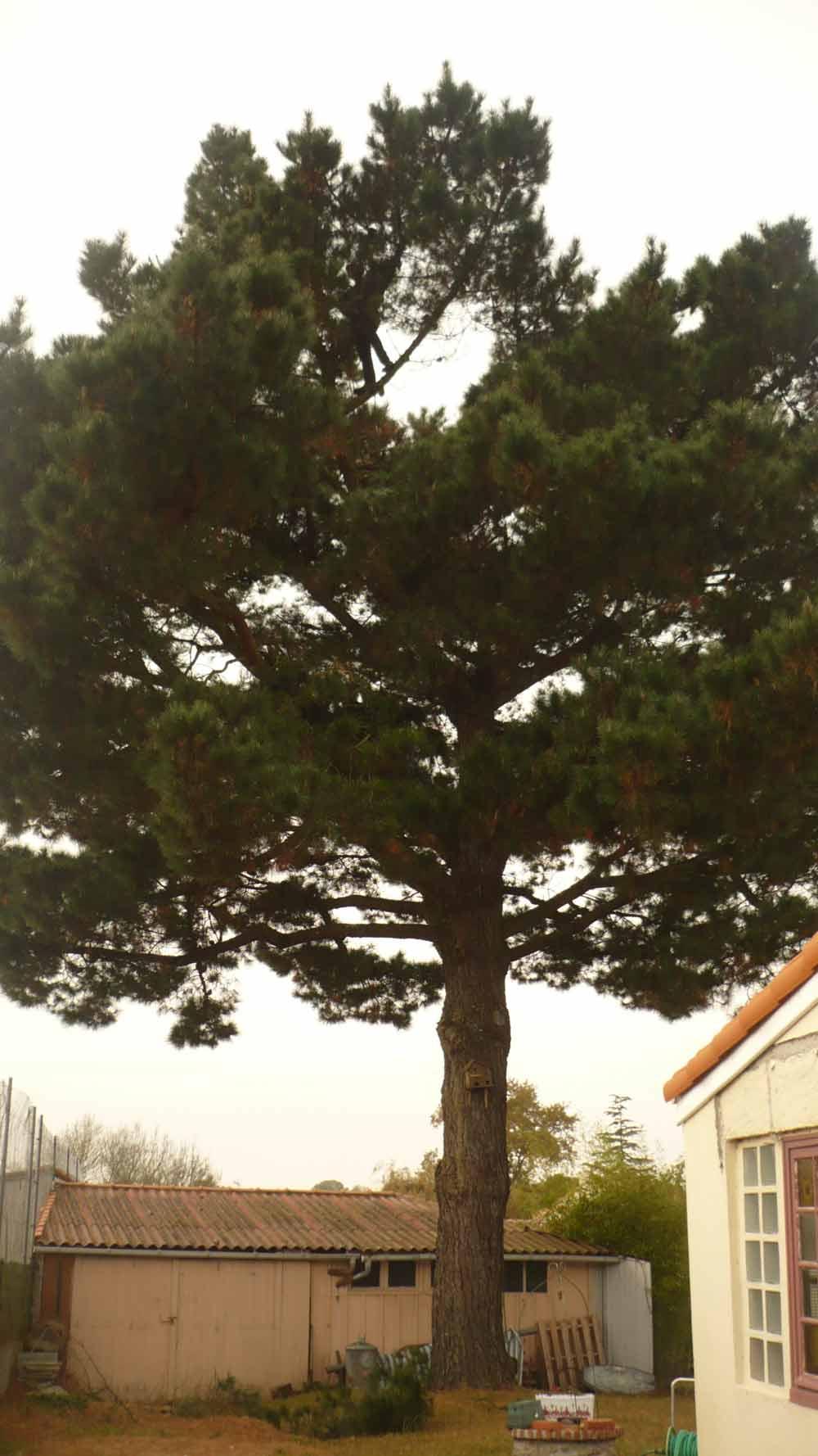 elagage arbre 44