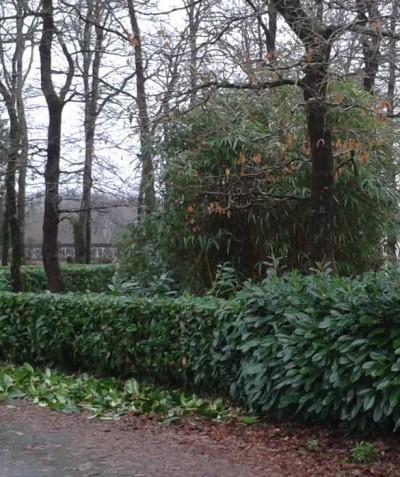 Tailler haie Bouaye Nantes 44 ADJ Espaces Verts St Mars de Coutais