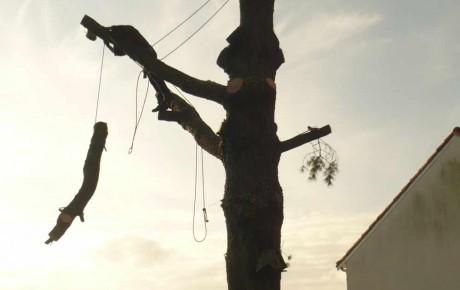 Arbre APRES - Elagage des arbres 44 à Saint Mars de Coutais - ADJ Espaces Verts Paysagiste