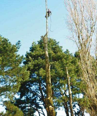 Pour couper vos arbres - Elaguer près de Bouaye et Nantes - ADJ Espaces Verts 44