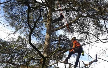 Elaguer vos arbres près de Bouaye et Nantes 44 avec ADJ Espaces Verts à St Mars de Coutais